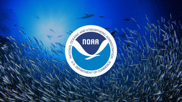 NOAA Banner